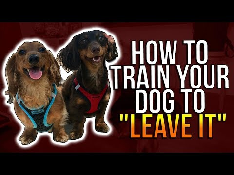 """HOW TO TRAIN YOUR DOG TO """"LEAVE IT"""""""