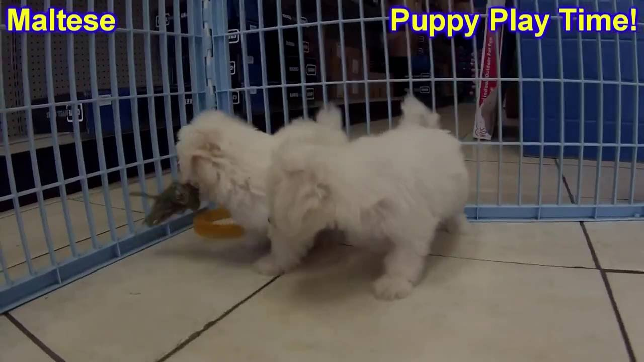Puppies Ky