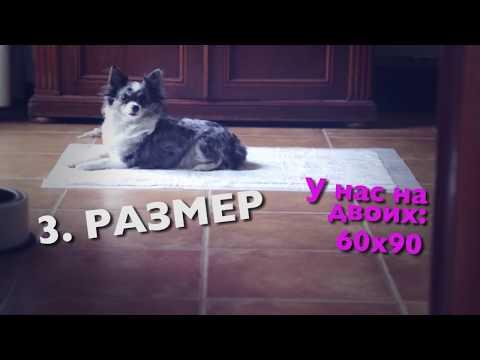 Приручаем щенка чихуахуа к пеленкеиз YouTube · С высокой четкостью · Длительность: 4 мин14 с  · Просмотры: более 11000 · отправлено: 07.01.2017 · кем отправлено: Dasha Dog&Dolls