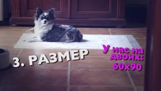 Как приучить щенка к пеленке, собаку к туалету | Чихуахуа Софи