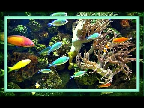 ♒ Aquarium Meditation - 1 Hour (with Music)