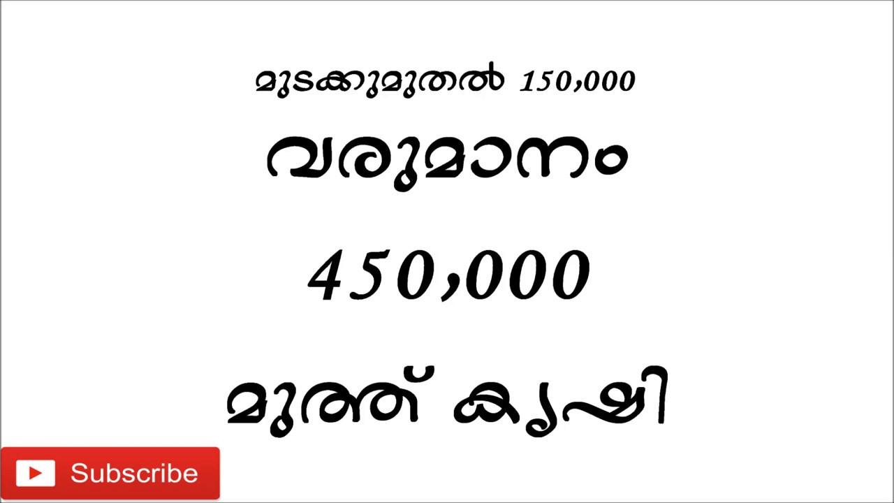 Business Ideas In India Pearl Farming Kerala Malayalam  E B Ae E B  E B A E B D E B A E B D  E B  E B  E B B E B Bf