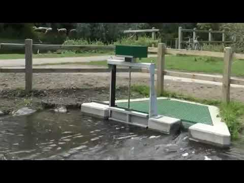 New 'Fish Pass' On River Cam Aims To Improve Biodiversity In Cambridge