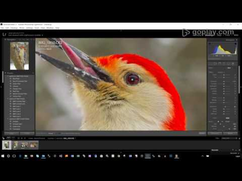 Lightroom Editing Series - Advanced Wildlife Raw Processing
