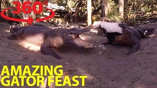 Extraordinary gator feeding frenzy in 360 thumbnail
