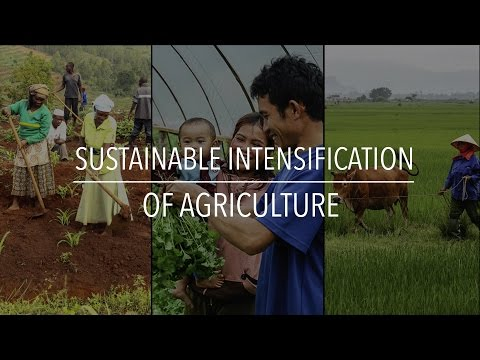 FAO Policy Series: Sustainable Intensification of Agriculture