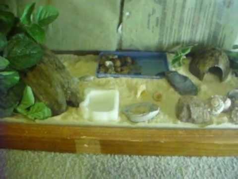 hermit crab habitat youtube. Black Bedroom Furniture Sets. Home Design Ideas