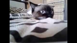 Мой ненормальный кот:)