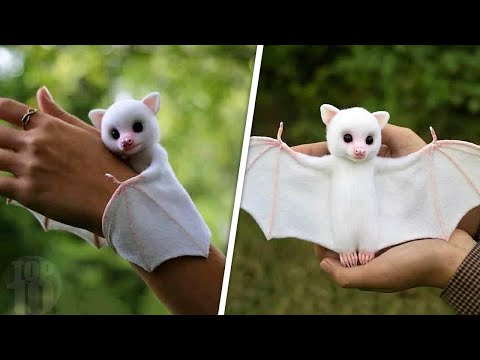 Download Cute Exotic Animals You Can Own As Pets