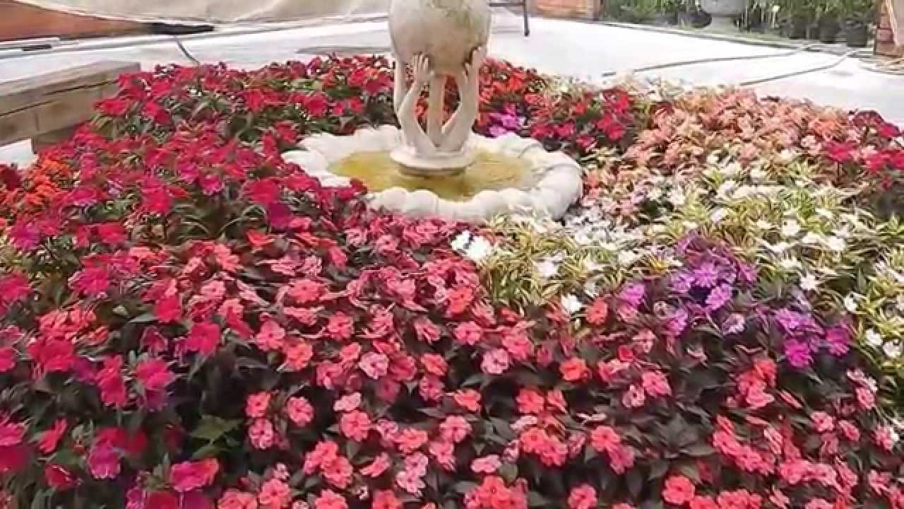 Mondini plantas como cultivar impatiens youtube for Como cultivar plantas ornamentales
