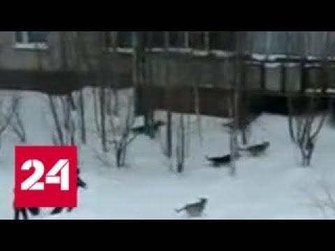 Вести. 'Дежурная часть' от 23.03.18 - Россия 24