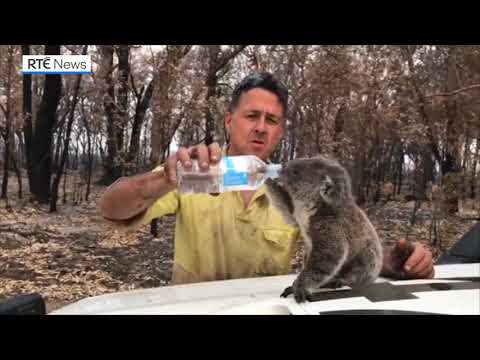 Firefighter Helps Out Thirsty Koala In Australia