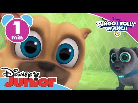 Bingo i Rolly w akcji! Nowy serial Disney Junior! from YouTube · Duration:  31 seconds