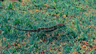 Chameleon Walk - Slow, slow, fast-fast, slow, slow