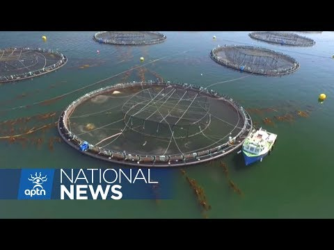 Taking a stand against BC fish farms | APTN News