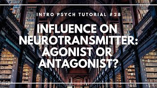 Influence on Neurotransmitter: Agonist or Antagonist? (Intro Psych Tutorial #28)