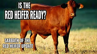 Red Heifer Update - Sabbath of the Red Heifer 2021