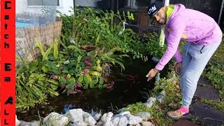 HOW TO BUILD A POND: Specific Pumps, Liners, Filters, and tools to build an ABOVE or IN-GROUND POND