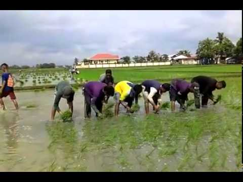 Planting rice style only in the Philippines