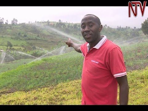 On The Farm: Kapchorwa farmer overcomes unpredictable weather with irrigation farming