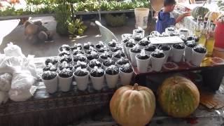Apia Produce Market - Apia, Samoa