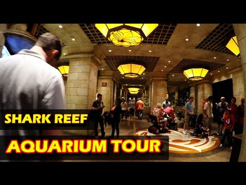 Shark Reef Aquarium Tour in 4K at Mandalay Bay Hotel & Casino in Las Vegas