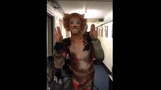 Christmas with the Cats | Cats the Musical