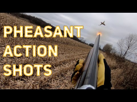 Pheasant Hunting Action Shots! | Compilation Video