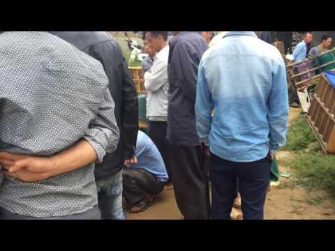 Chợ chim Hoạ My Pha Long - Mường Khương - Lào Cai