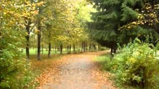 Lakoni live 220 км от Москвы п. Бабынино 8