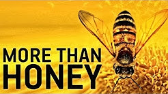 MORE THAN HONEY Trailer German Deutsch HD 2012
