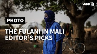SPECIAL REPORT - PART II: The Fulani in Mali I AFP