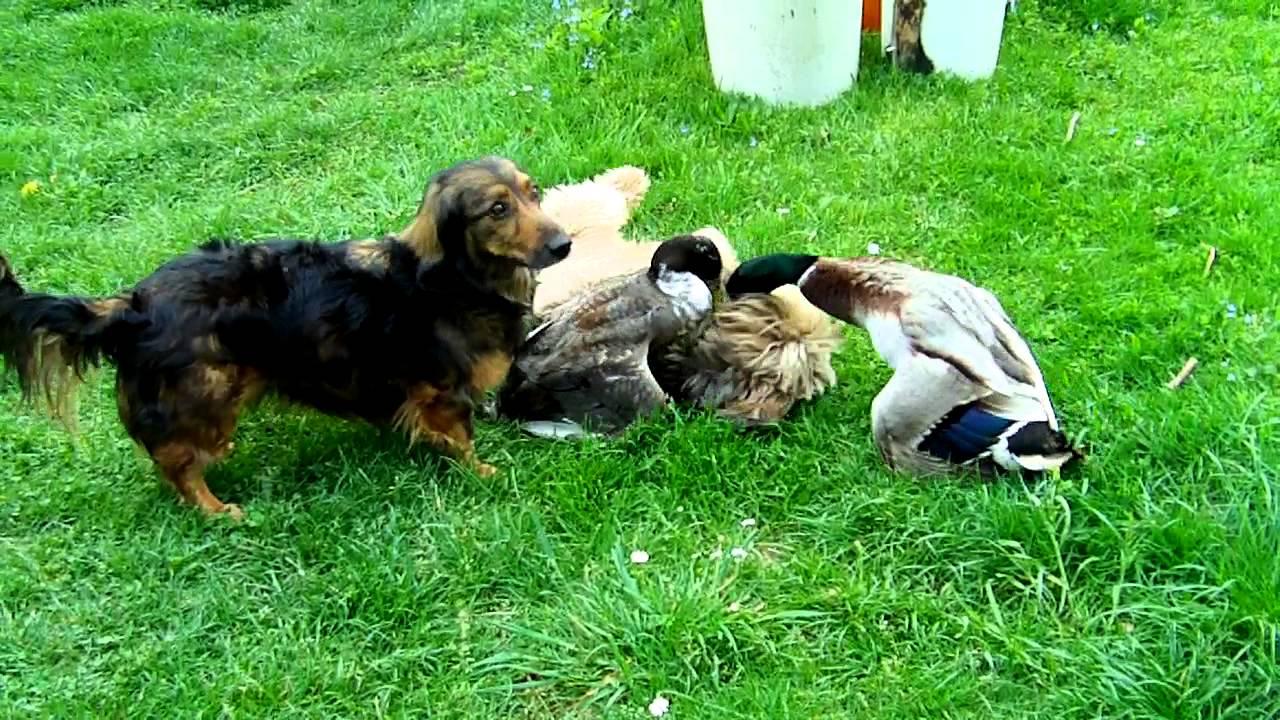 Tierfreundschaften