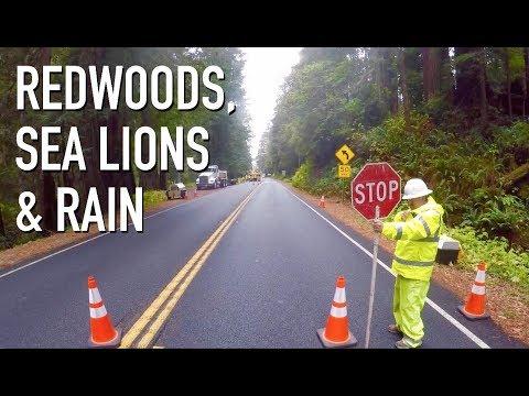 REDWOODS, SEA LIONS & RAIN