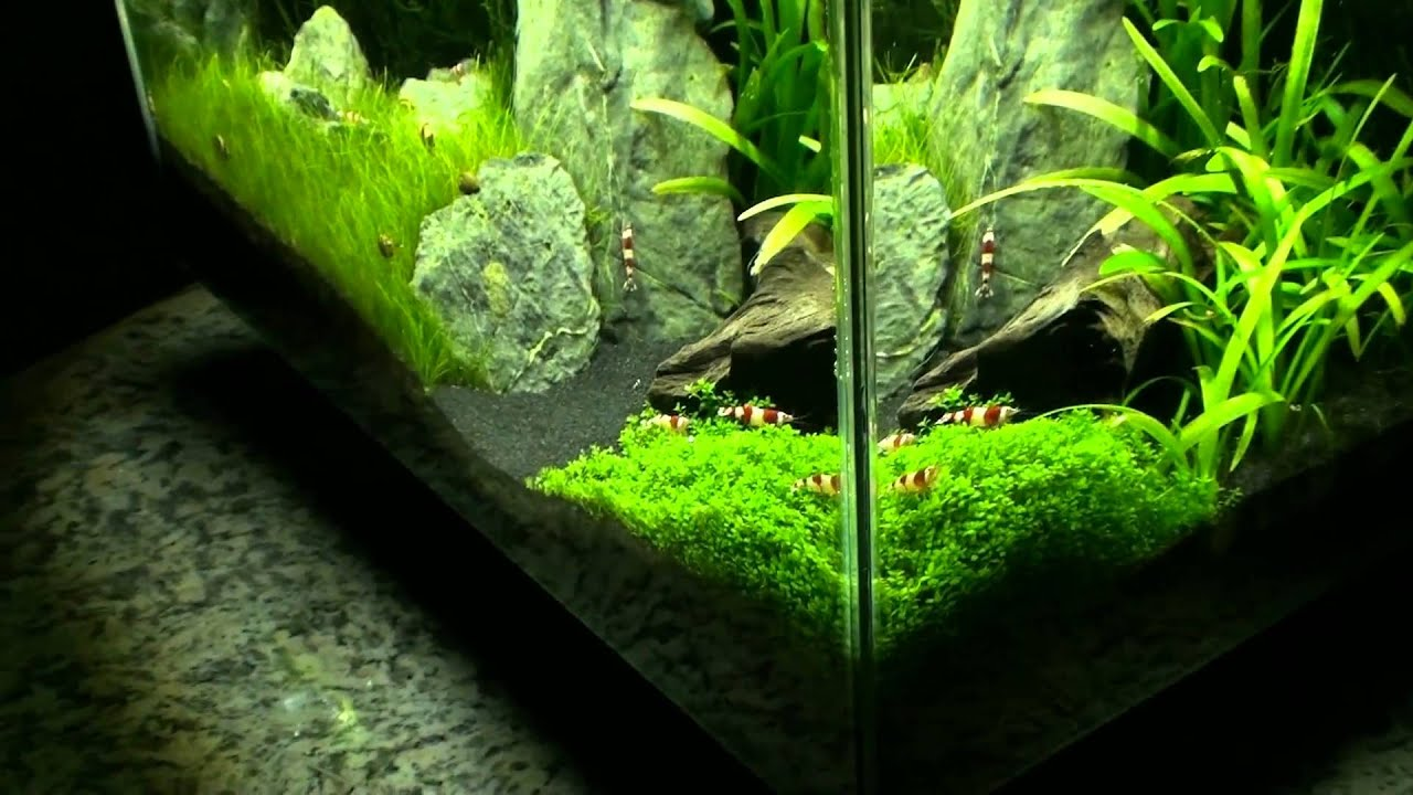 Fluval Edge (01.02.2011)   YouTube
