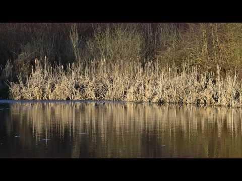 Nikon D3100 18-105 mm VR   photo test #1 [HD]