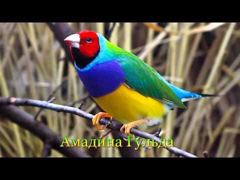 фото и название и описание птицы