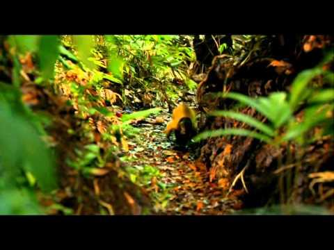 Random Movie Pick - Amazonia (2013) - Trailer YouTube Trailer