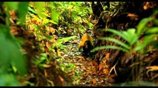 Amazonia (2013) - Trailer