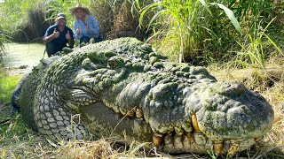 FEEDING HUGE HUNGRY GIGANTIC GNARLY CROCODILES with MATT WRIGHT!