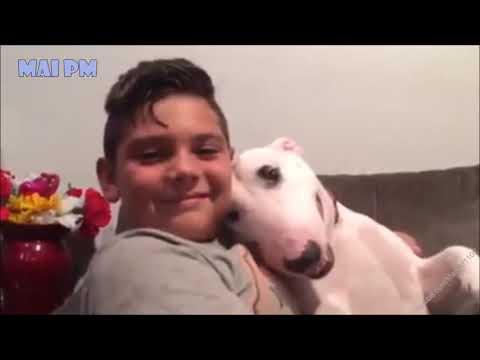 Perros peligrosos ? Juzga tu mismo #4