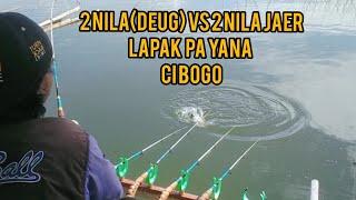 MANCING JATI GEDE Masih Di Lapak Yg Sama Di Daerah CIBOGO