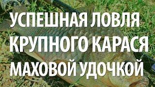 Крупная рыба карась. Рыбалка на карася поплавочной удочкой(Рыболовный интернет-магазин: http://ali.pub/bctei Повсеместная рыба карась ловится различными рыболовными снастям..., 2015-07-21T20:50:10.000Z)