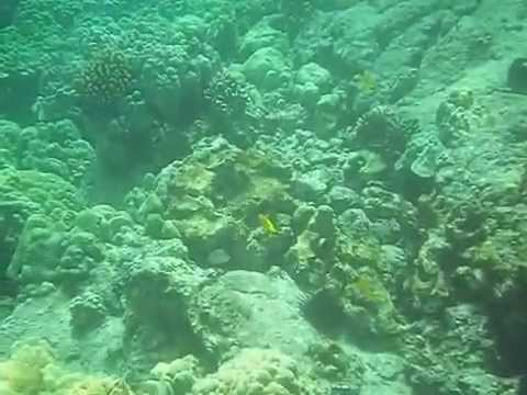 Snorkeling on Kealekekua Bay   The Girl and Globe