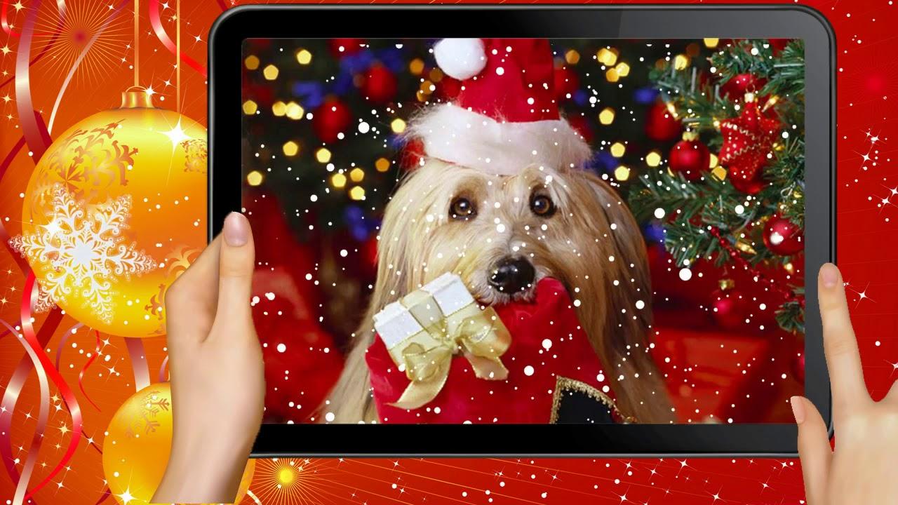 Новогодняя видео-открытка на Новый год 2018 год собаки ...