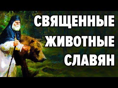 Сакральные животные у славян. Почему именно медведь символ нашей страны