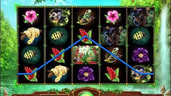 How to play Rainforest Dream Slot Game - Williams Slot