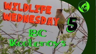 Wildlife Wednesday Collaboration Week 5 - Wildlife in our area!