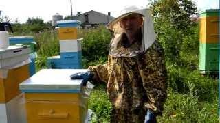 Пчеловодство для начинающих. Видео.