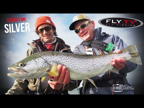 FLY TV - Springtime Silver - Sea Trout Fly Fishing in Denmark